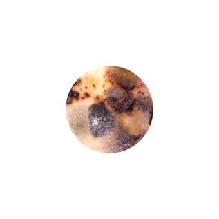 IMG_CORONELES_03(50x50_20cm).jpg