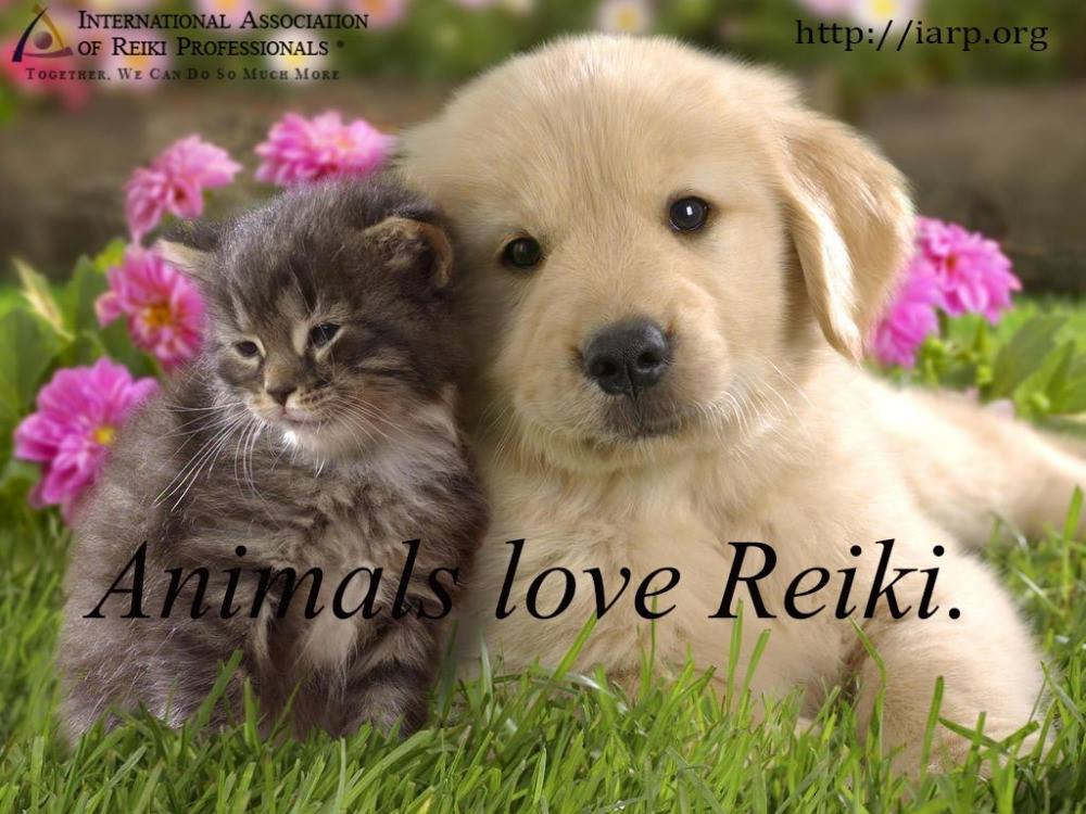 Animal Reiki Session