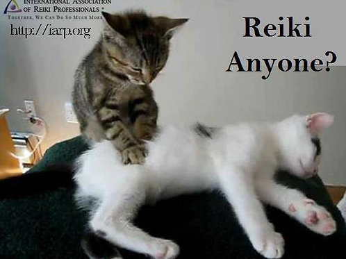 Reiki Session for a Pet
