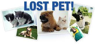 Find a Lost Pet