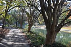 San Antonio River 3