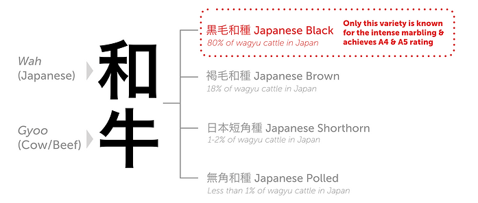 Wagyu+Breeds+3.png