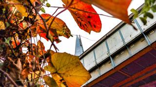 Autumn Shard