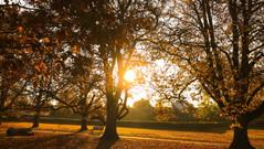 25/10/2018 - Autumn Sunrise
