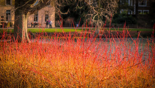 Fiery Colours at the Palm House Pond