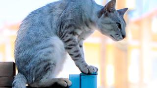Zante Stray Cats