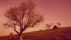 Deep Autumn Cissbury