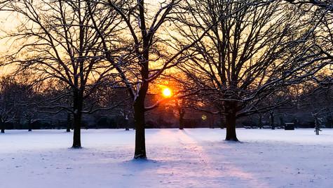 Winter Sun II