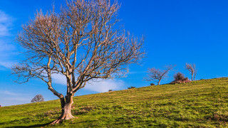 The Hills of Cissbury Ring