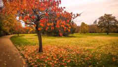 09/11/2018 - Autumn Leaves