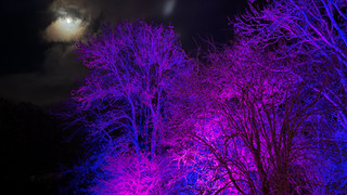 Moon & The Purple Trees