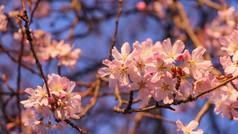 Blossom in Lammas