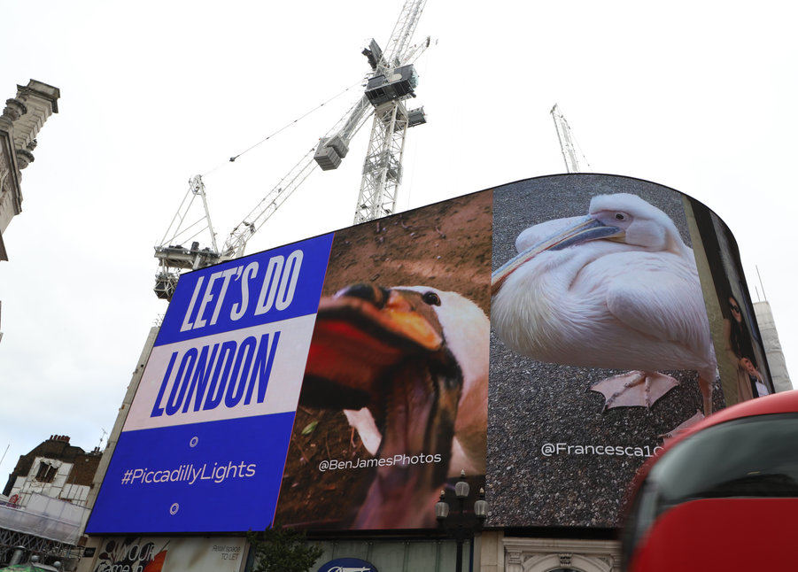 Piccadilly Lights