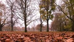 23/11/2018 - Autumn Leaves