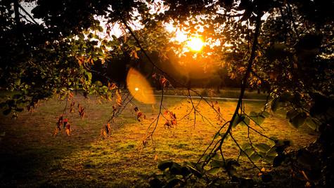 Autumn Surise