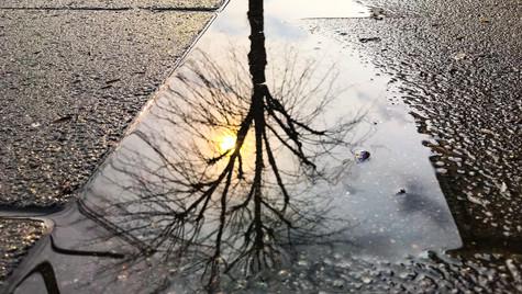 Grey Reflections