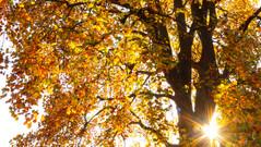 20/10/2018 - Autumn Sun