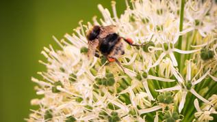 Bees hard at work