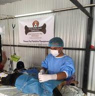 Pt 1 309 dogs sterilised 2.JPG