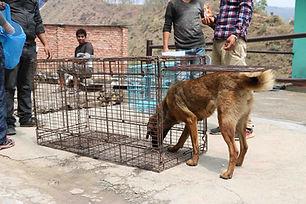 HKD 3000 Animal Trap.jpg
