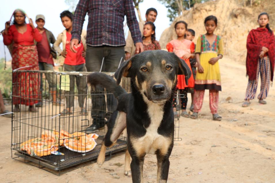 2018 Home Street home Nepal Home Street Home 誰家的毛孩 Nepal Community Dog TNR Project尼泊爾社區狗隻絕育計畫 Dog TNR Program