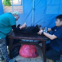 HSH, Home Street Home, Nepal, Dog overpopulation, Stray dogs, TNR, 尼泊爾流浪狗, 捕捉絕育放回, 義工, volunteer