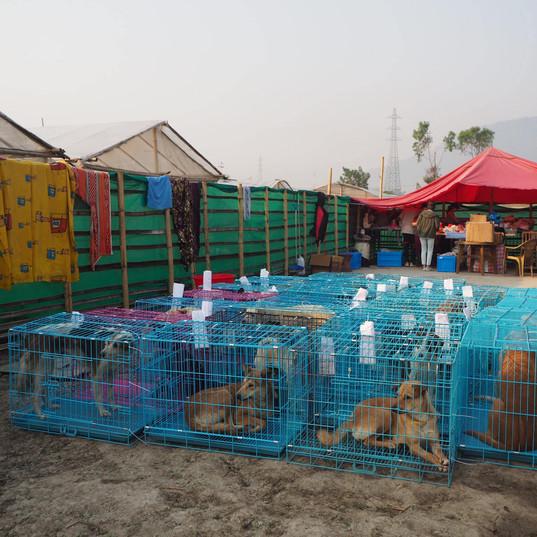 Pt 1 309 dogs sterilised.jpg