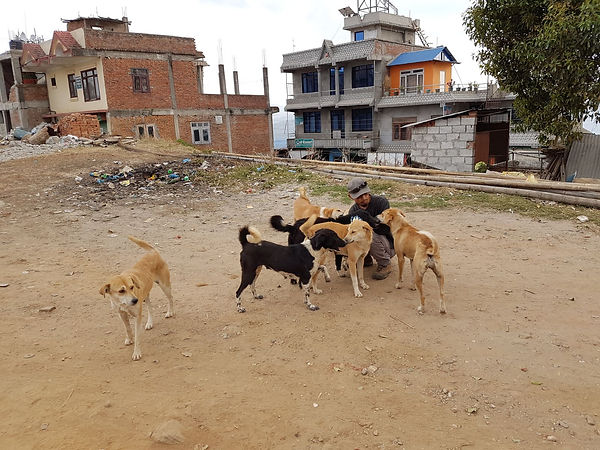 HSH, Home Street Home, Nepal, Dog overpopulation, Stray dogs, TNR, 尼泊爾流浪狗, 捕捉絕育放回, 義工, volunteer