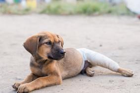 2018 HomeStreethome Nepal Home Street Home 誰家的毛孩 Nepal Community Dog TNR Project尼泊爾社區狗隻絕育計畫 Dog TNR Program