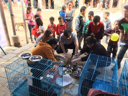 2018 HomeStreethome Nepal Community Dog TNR Program