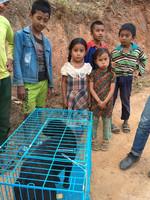 2018 HomeStreethome Nepal Community Dog TNR Program