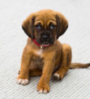 Puppy Portrait_edited.jpg