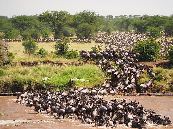 migration-jorge-tung-go2africa.jpg