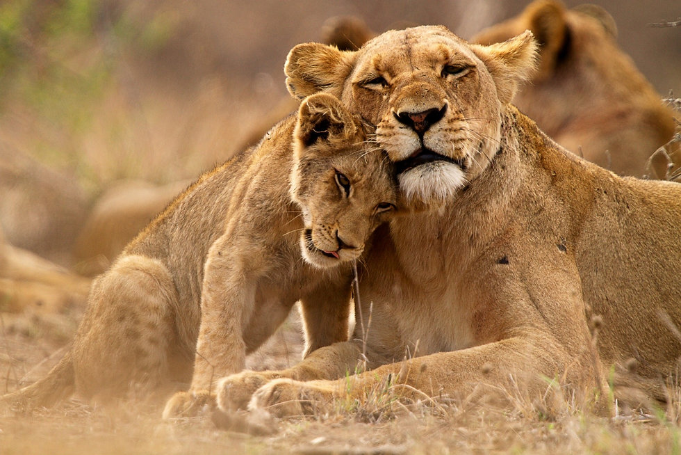 lion-1611409153288-458.jpg
