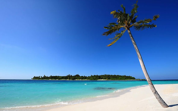 palm on  beach.jpg