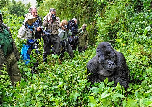 10-Days-Gorilla-Wildlife-Safari-Uganda.j
