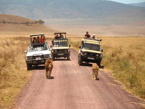 tanzania-safari-gamedrive.jpg