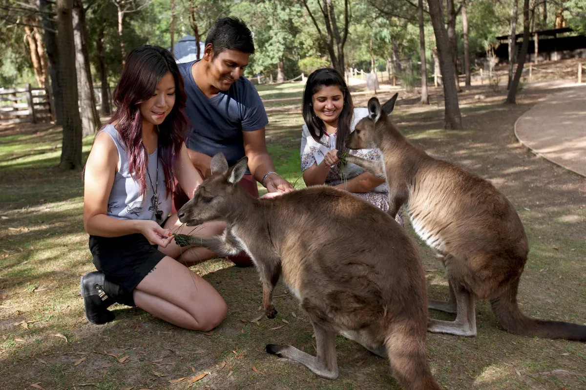 GO with a local to Healesville Sanctuary and Phillip Island on a private group tour from Geelong.