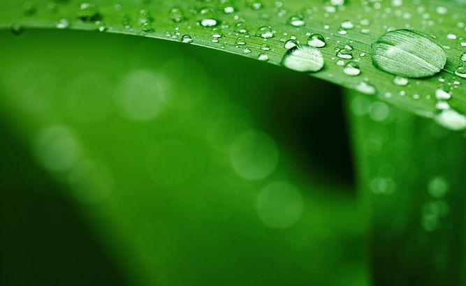 Sonora_Leaf_Background_HD_1920X0-1.jpg