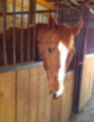 Dorian in stall 1-8-15 2.jpg