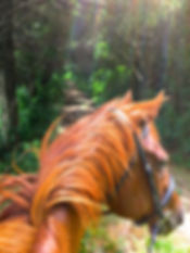 Dorian on trail 6-28-16.jpg