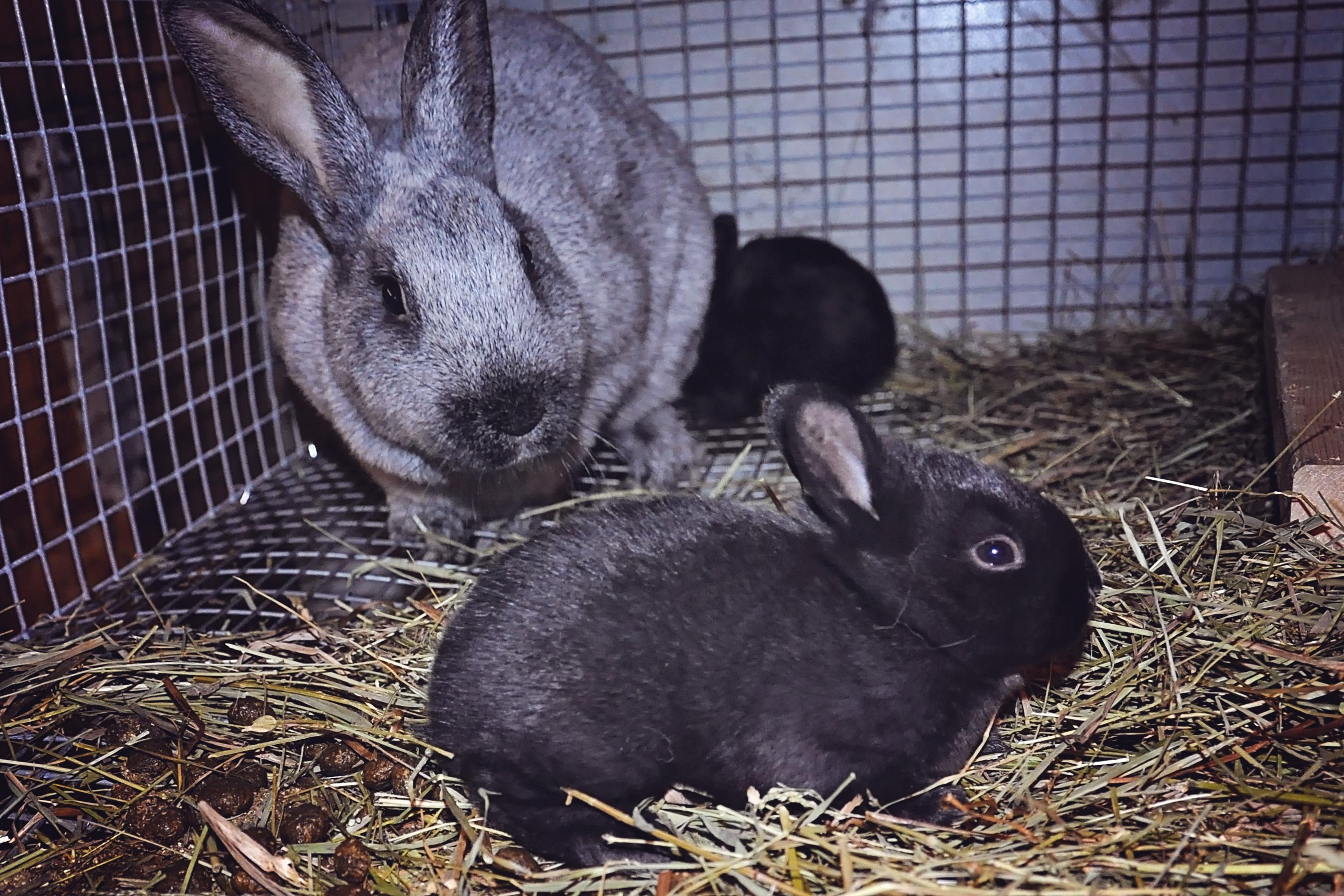 Chlothilde et lapinou - 3 semaines