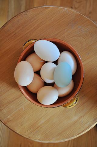 Les oeufs bleus de mes poules