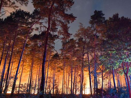 Bericht des rbb über die Waldbrände im Land Brandenburg