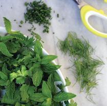 Food photography: Herb salad