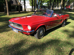 Active Oldtimer Ford Mustang mieten Au - 6