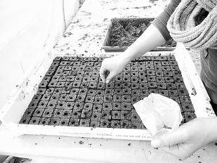 Semis plantes medicinales