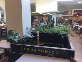 January 2019 Aquaponics.jpg