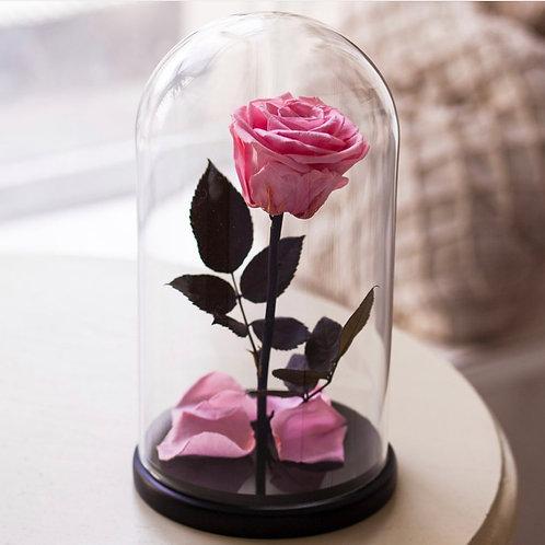 Роза в колбе - 03