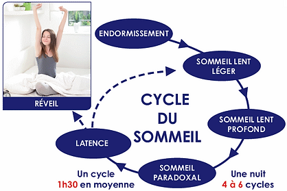 CYCLE SOMMEIL.png